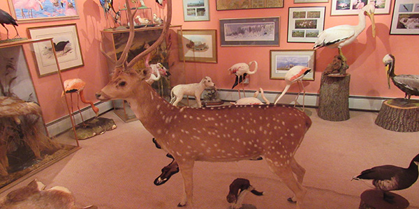 The Christopher Marler Collection of Taxidermy, Pictures and Paintings